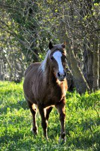 stage-quantique-bebes-chevaux-77-opt